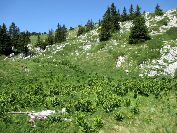 Photograph of the summit prairie on the Rocher de Chalves, Grande Sure