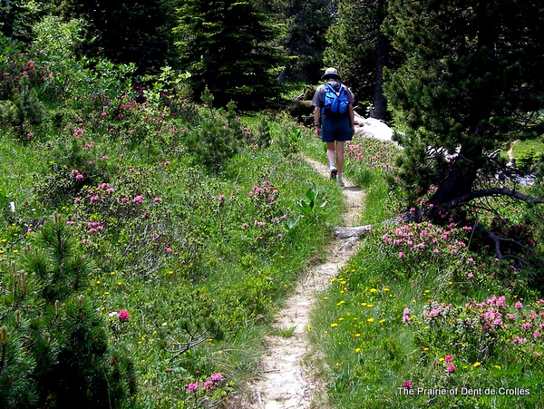 Walking through the Dent de Crolles Prairie
